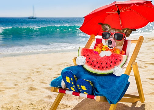 Image - Cute dog enjoying the shade on a nice sunny day